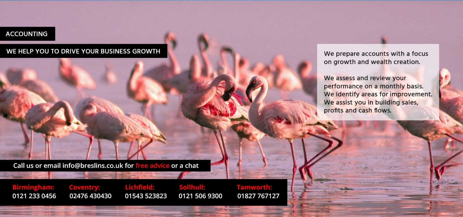 Accounts services poster with flamingos in background